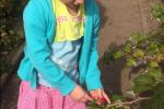 2017 groententuin (2)